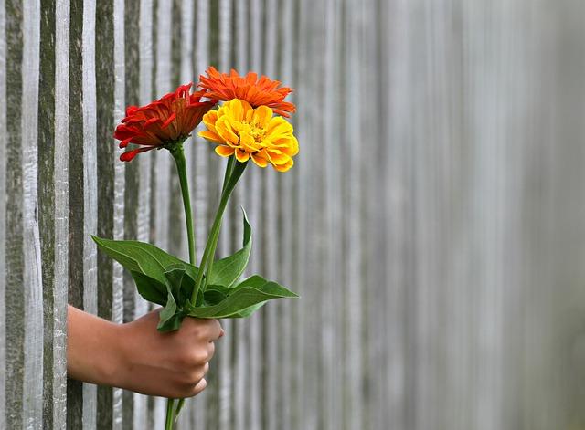 Types de clôtures et de murs pour votre jardin