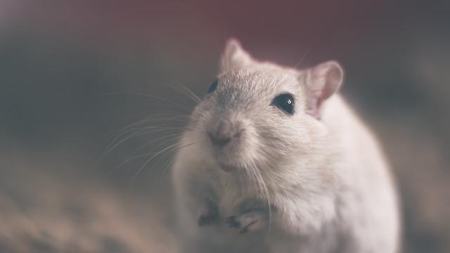 Piège à souris écologique